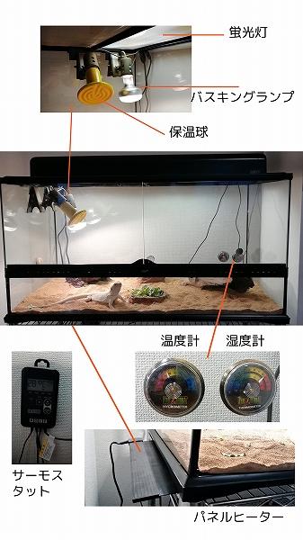 フトアゴヒゲトカゲの環境器具